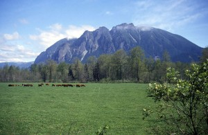 800px-Mt_si_and_meadowbrook_cows